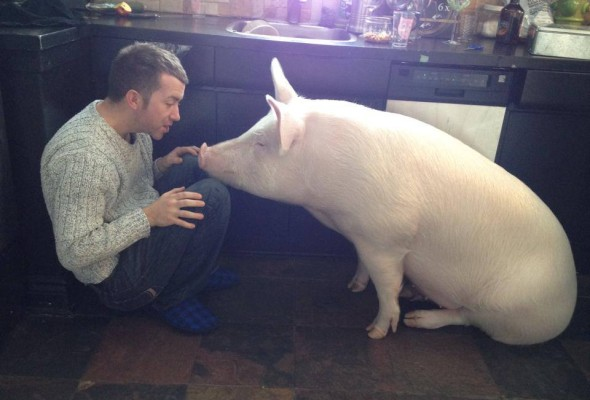 Inspired by Animals in 2013: Day 11 – Esther the Wonder Pig