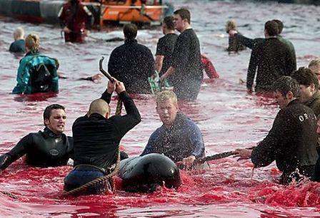 calderon dolphins