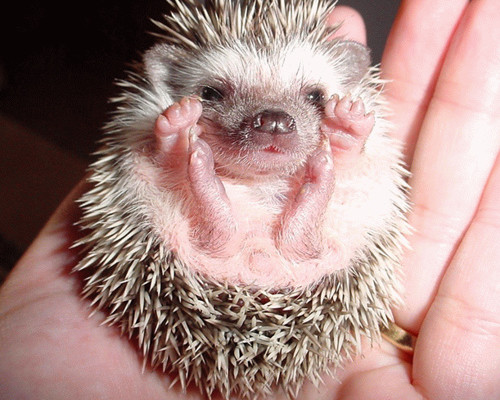 Inspired by Animals in 2013: Day 7 – The Hedgehog